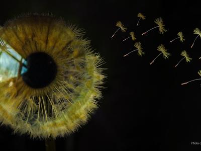 Thumb immagine sito glaucoma copia