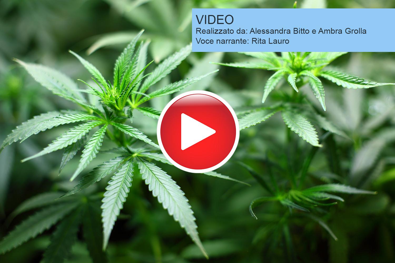 Cannabis e dolore