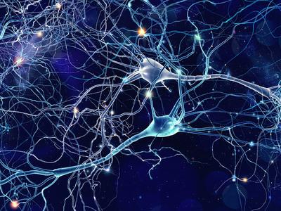 Thumb neuroni