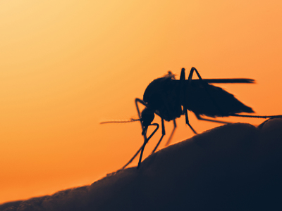 Thumb zanzara malaria